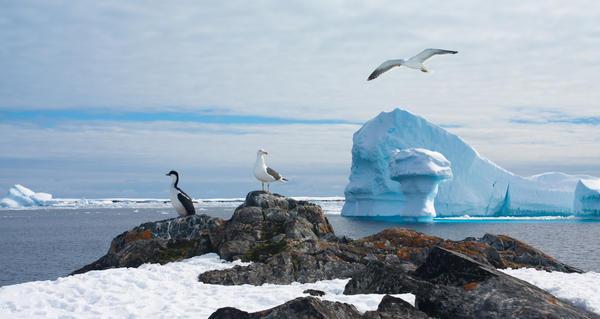 Fugler og polar is