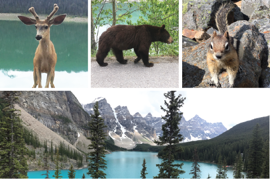 Kanadisk natur