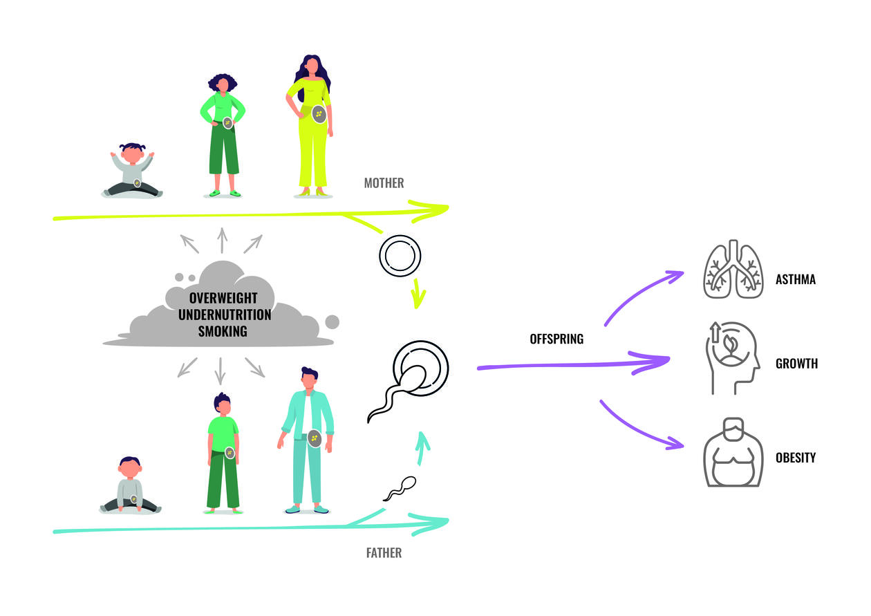Illustrasjonen viser hvordan både røyking og overvekt kan påvirke fremtidige barn via reproduksjonscellene