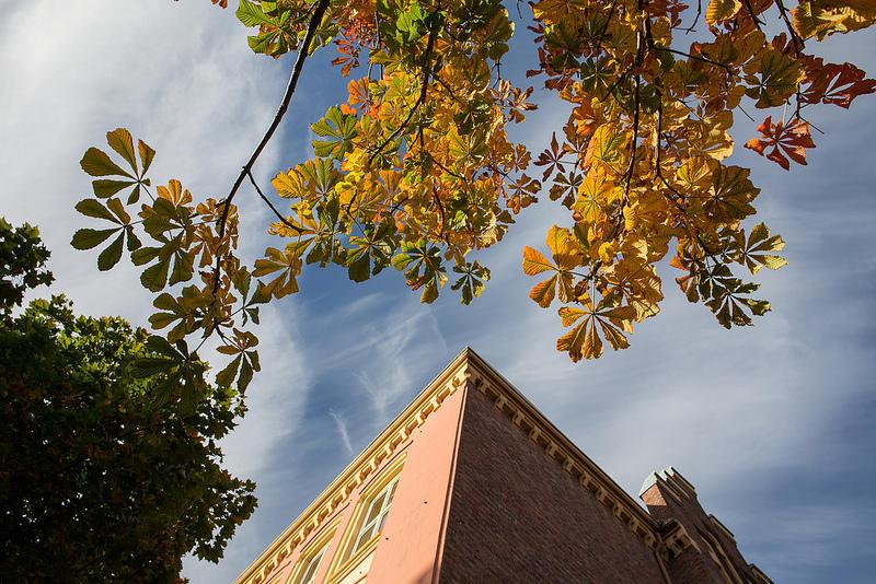 Bilde av Dragefjellet skole og gyldent løv