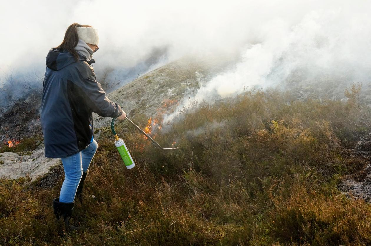 Student set fire to old and coarse heath. Newly burned heath is visible in the background.