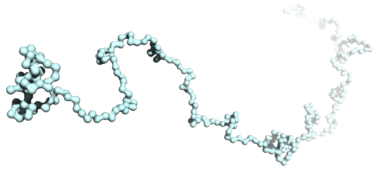 Single periaxin conformation