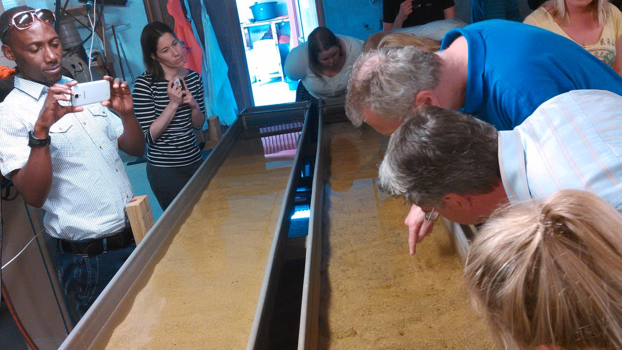 People looking at tiny mussels in a long tank.
