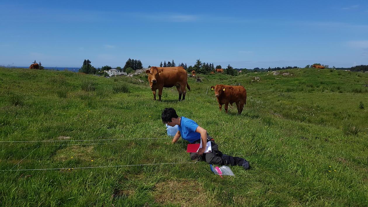 Photo: Field work in field grazed by cows