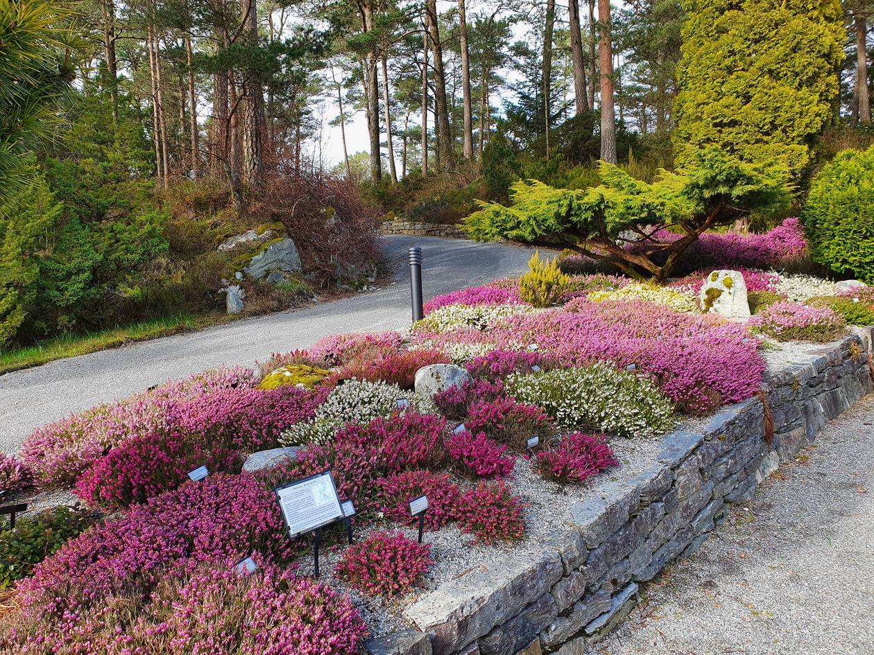 The heather garden