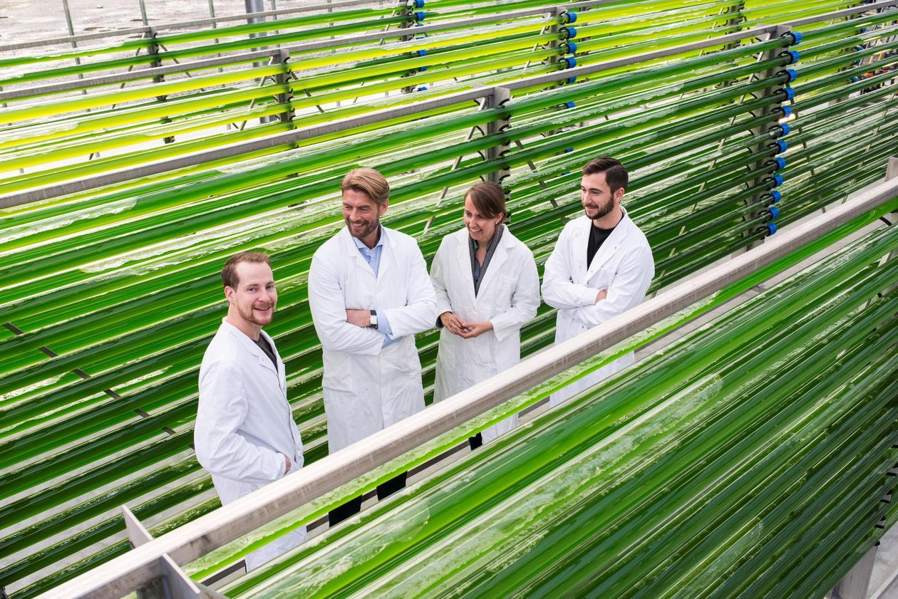 Bilete av 4 forskarar frå UiB og Uni Research mellom røyr der algane blir produserte.