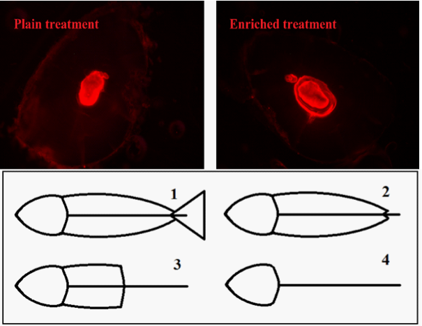 Two red blotches, and a diagram of fish at different degrees of digestion
