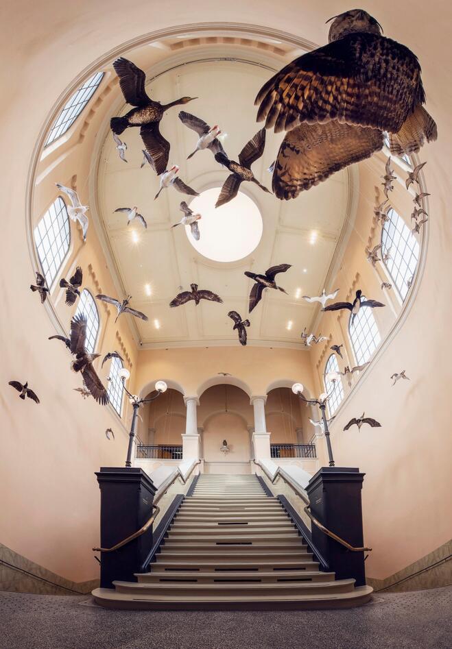 Foajeen i universitetsmuseet med fugler hengende fra taket