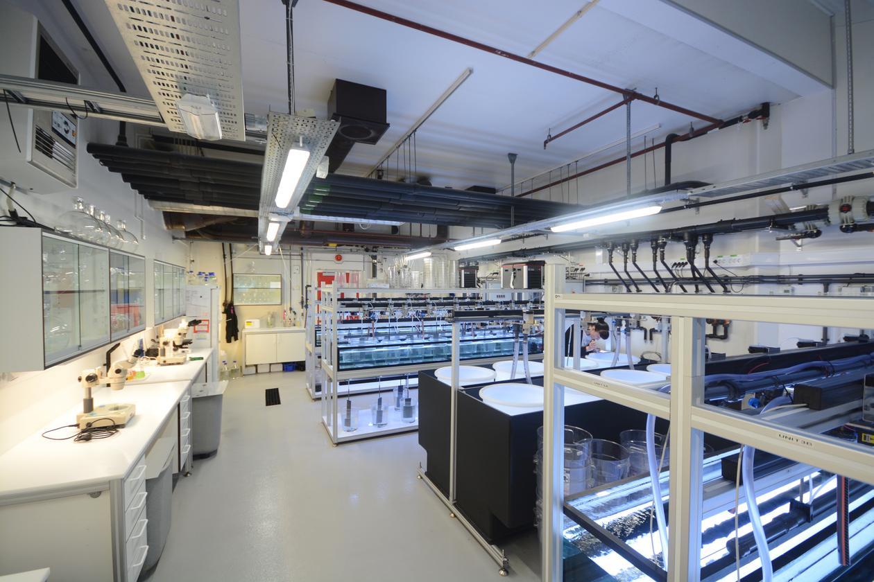 Appendicularia Facility5