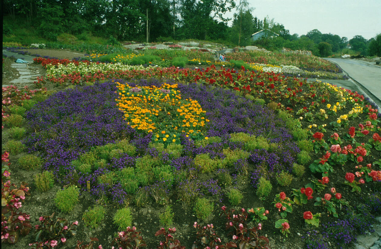 The University Gardens at the University of Bergen displaying a floral recreation of the university logo.