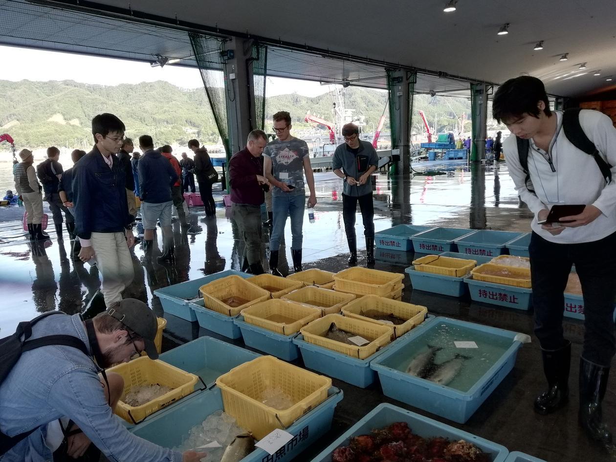 Studenter følger mottak og auksjon av fangst på det lokale fiskemarkedet i Otsuchi. Foto: Angela Etayo.
