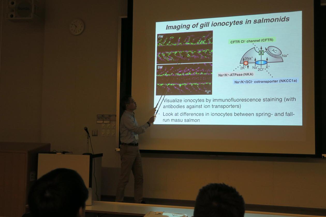 Professor Junya Hiroi forklarer studentene hvordan best analysere spesialiserte saltregulerende celler i gjeller hos fisk. Foto: Lars Ebbesson.