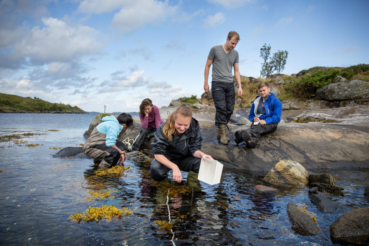 Biology students sitting in the waterline, studying seaweed