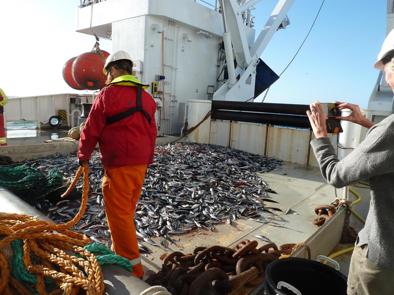 Fiskefangst på dekk av et fartøy ute på havet