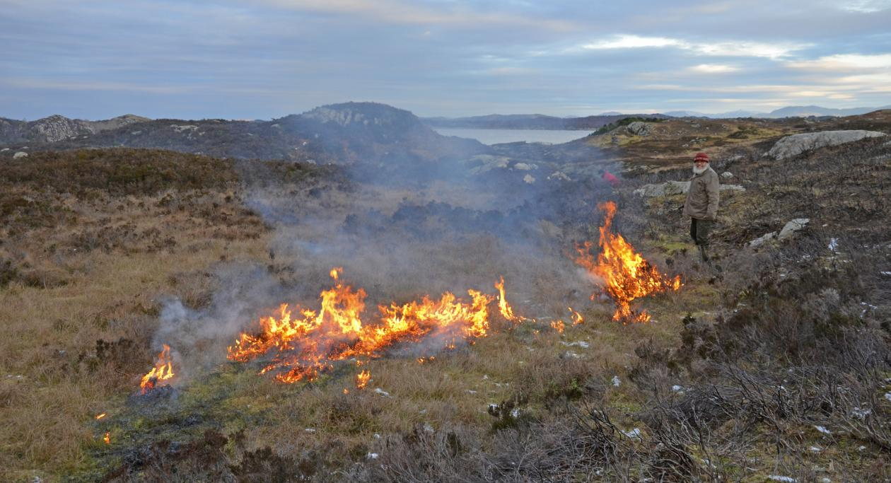 Burning the old-growth heather to encourage new, more nutritous growth on the heathland with Mons Kvamme controlling the fire
