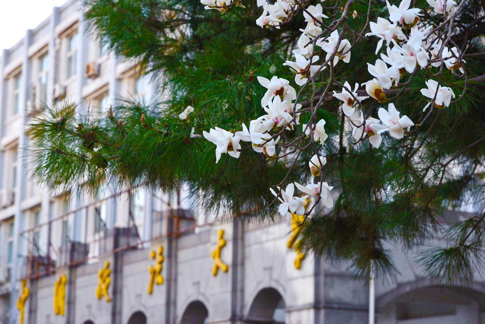 Blomster foran bygg på campus