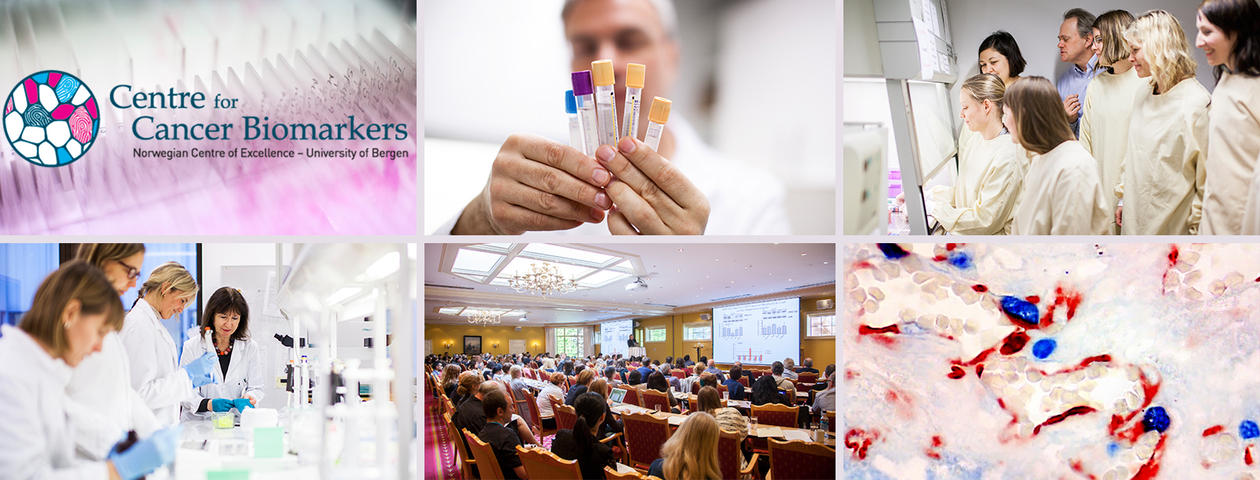 Collage of photos from CCBIO situations; research, teaching, symposia.