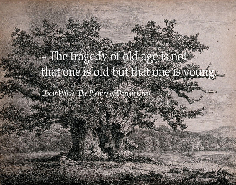 A gnarled and hollow old oak tree