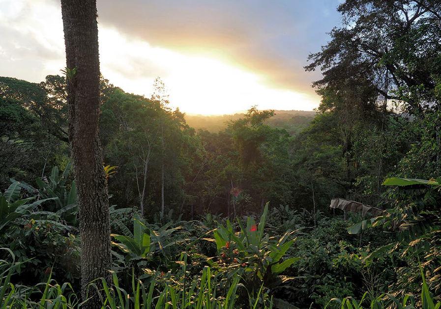 Cocoa agroforestry systems (Cabrucas) in Bahia, Brazil