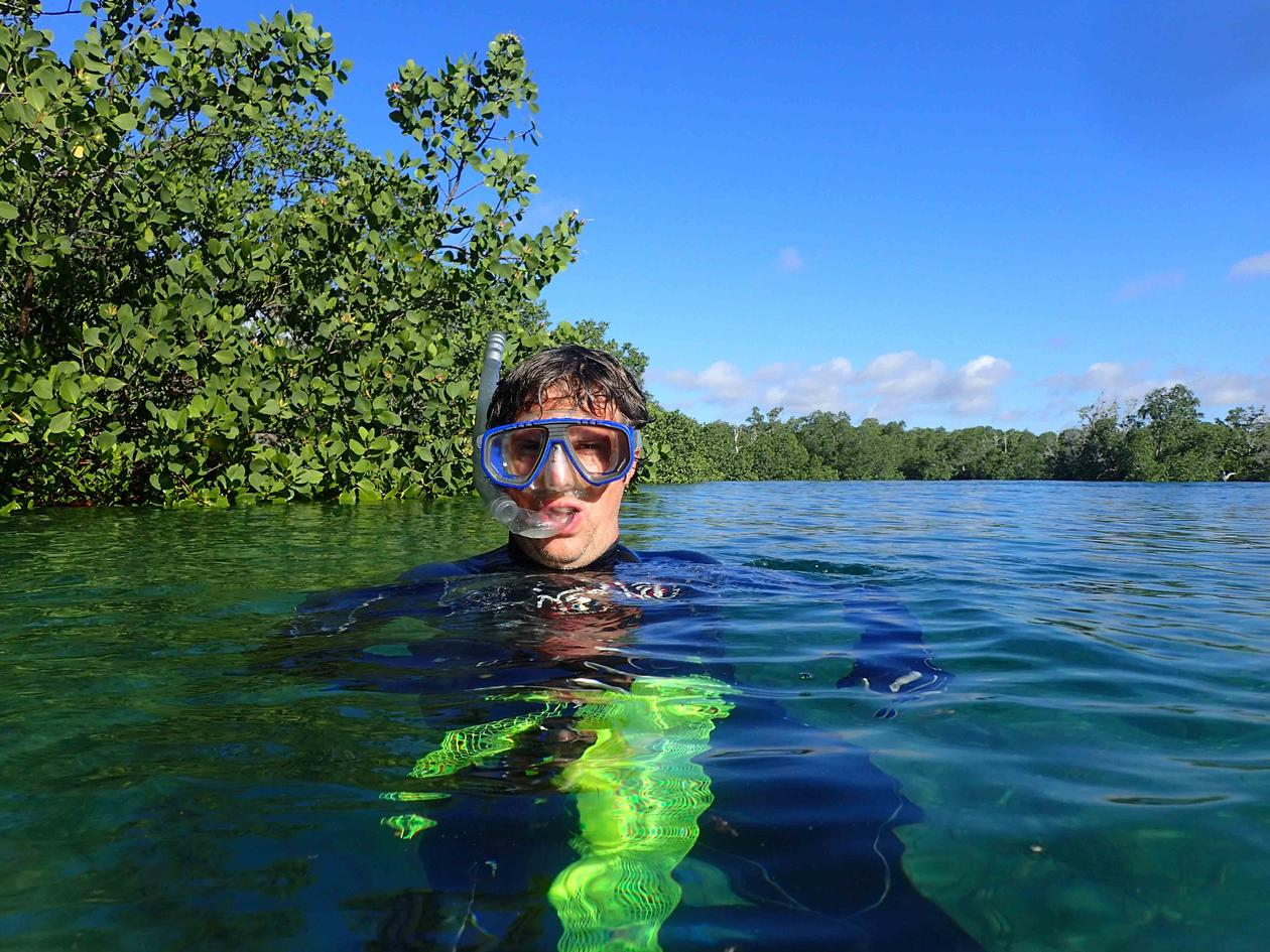 The author collecting in the mangroves