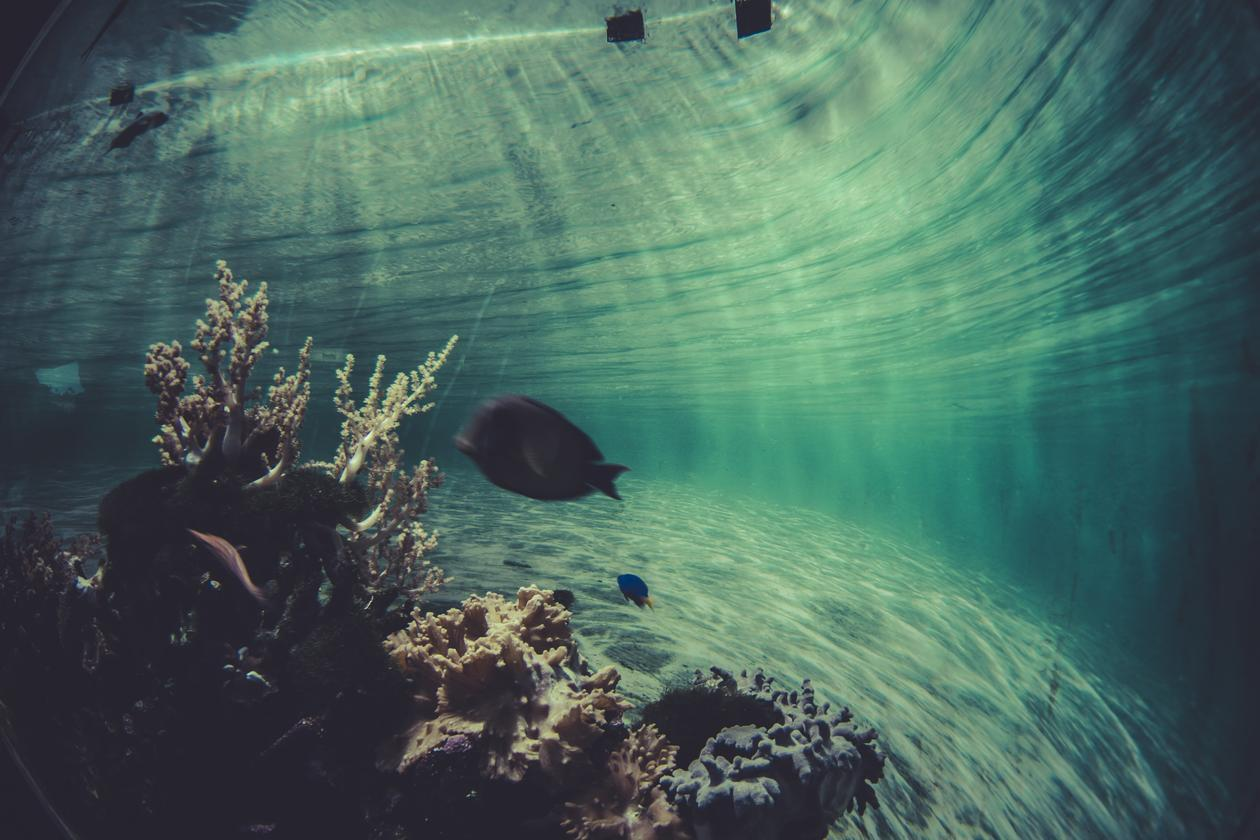 Underwater photo of single fish with light breaking through from the ocean surface
