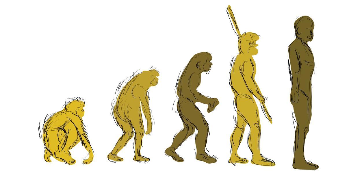 Drawing of human evolution