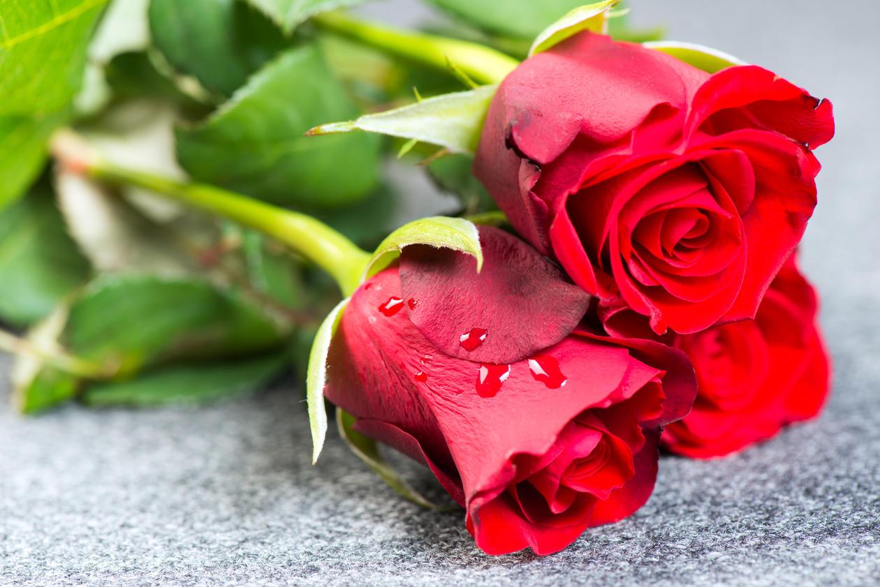Flowers, illustration photo