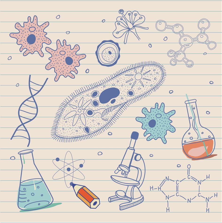 Bildet viser ulike biologiske faktorer.
