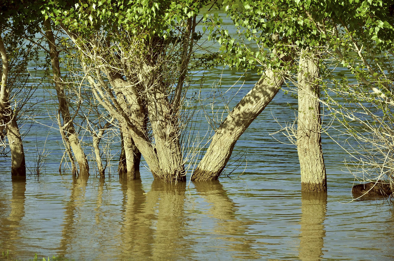 Trees in the flood-basin of the river Danube
