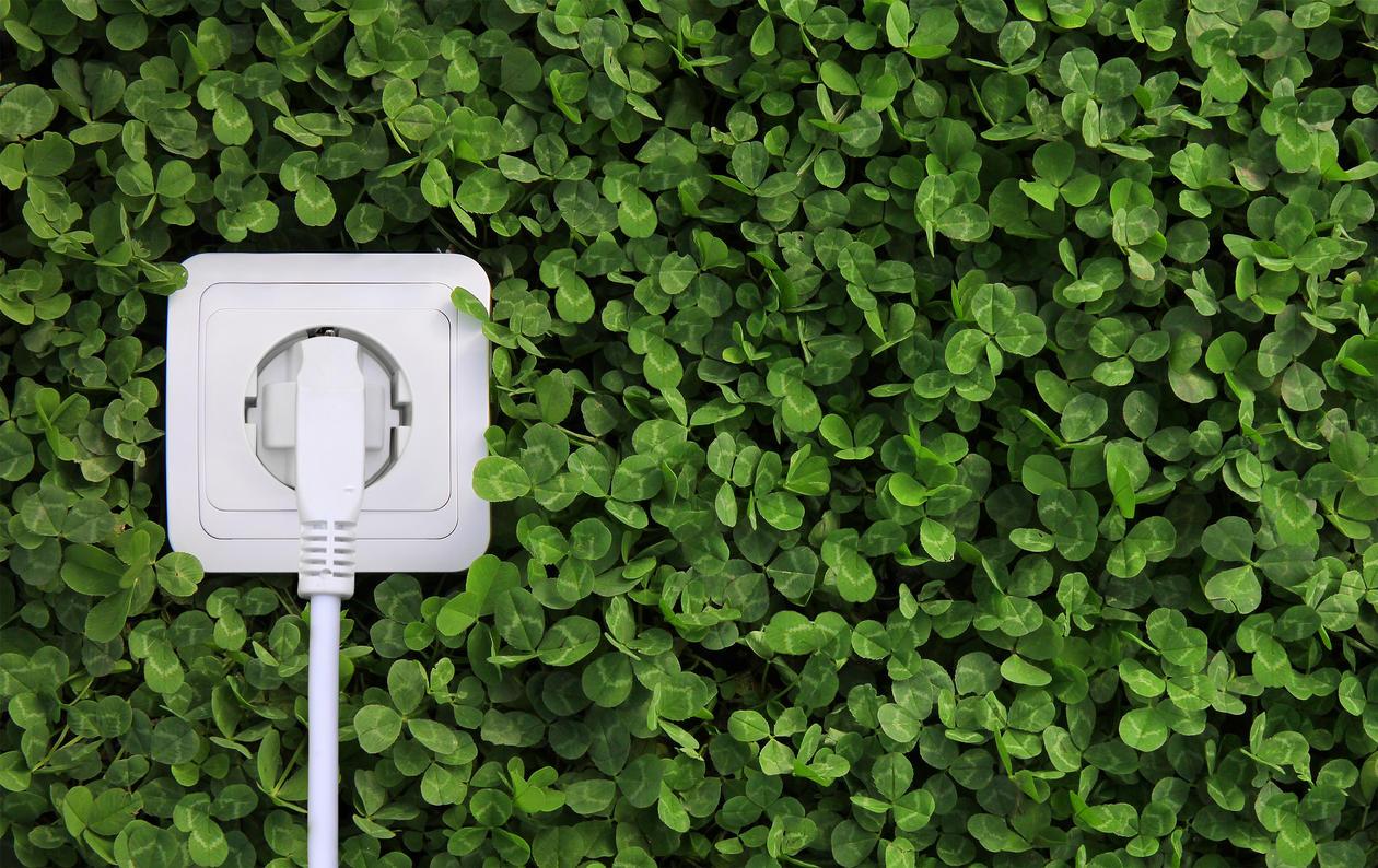 electrical plug in bush