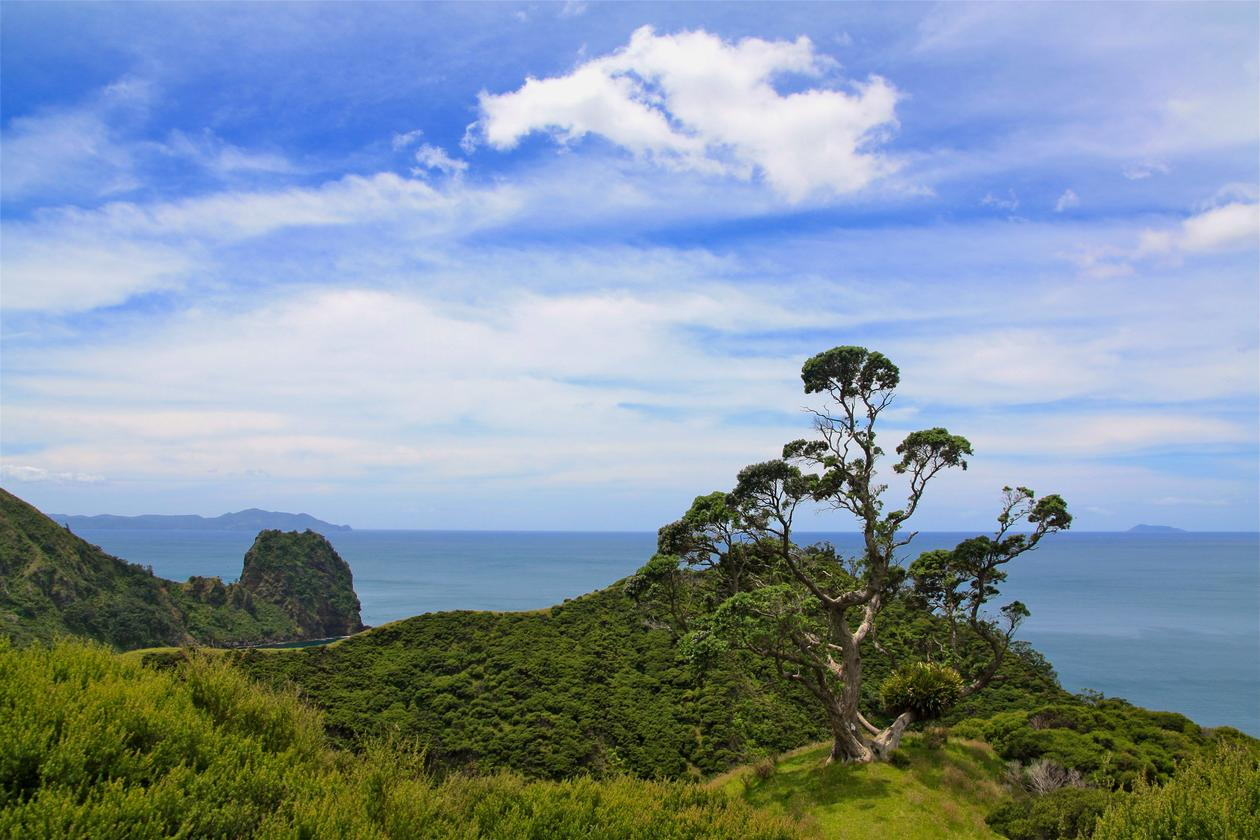 Landscape in New Zealand, ocean and tree