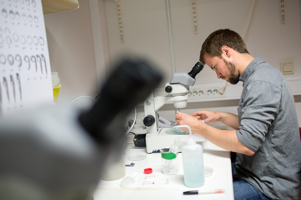 Student looking in a microscope