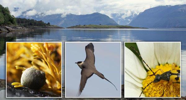 Snegle på tang, fugle og insekt på blome