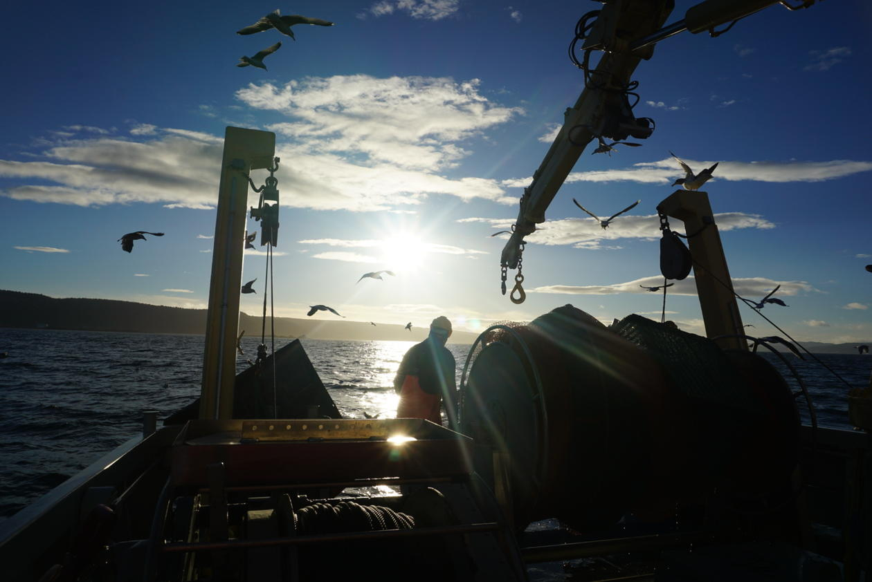 Trawling for fish in the Oslo fjord at sunset