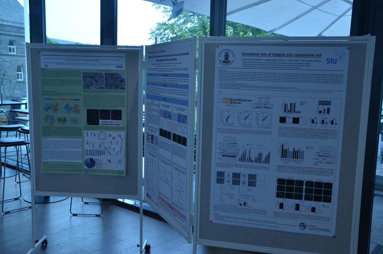 Poster session at Bergen Fibrosis Conference, 2019