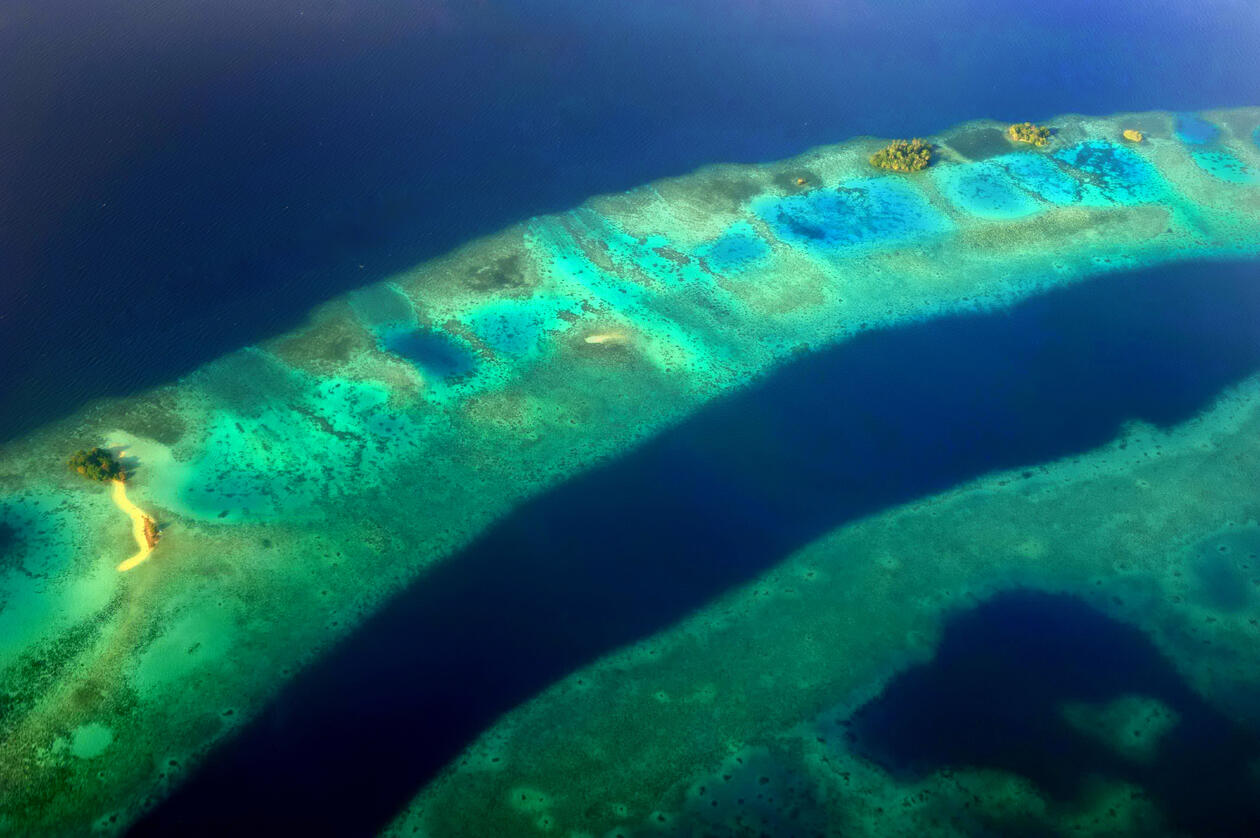 This image displays a section of a coral reef in the Solomon Islands