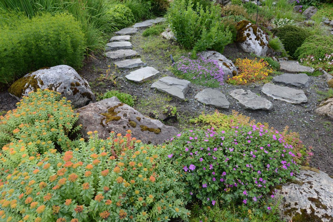 Botanisk hage kultivarer