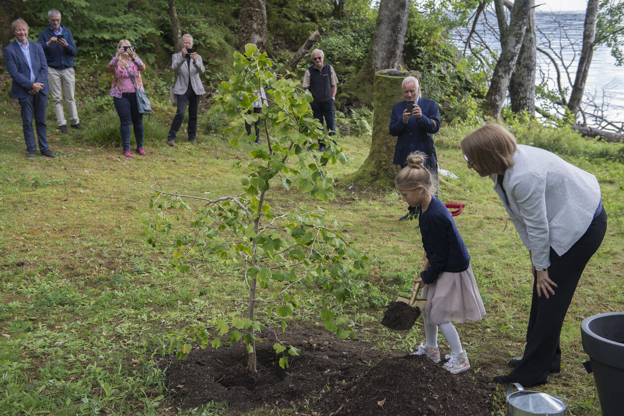 Arboretet 50 år Ginkgo