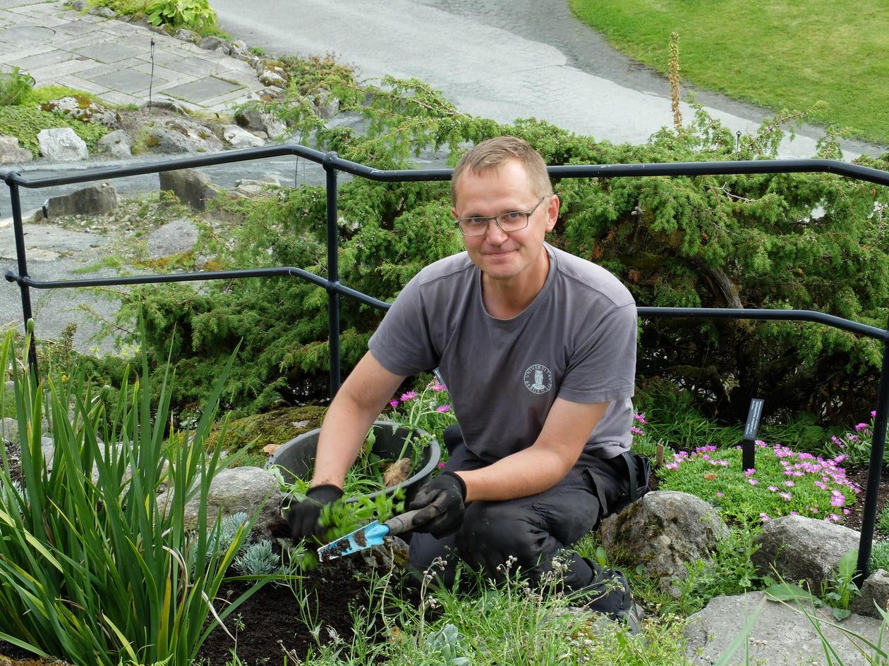 Luking i Fjellhagen er en av arbeidsoppgavene i Botanisk hage.