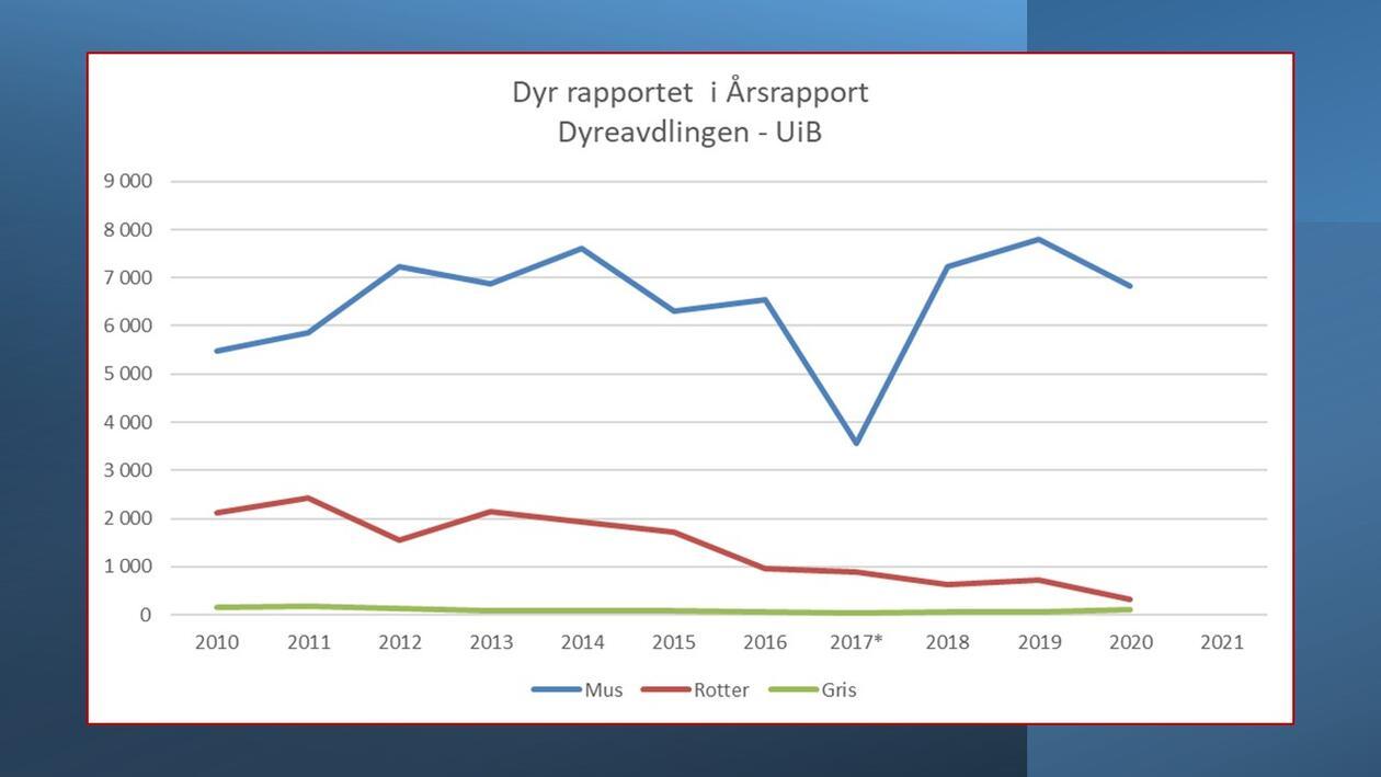 Dyr rapportert 2011-2020