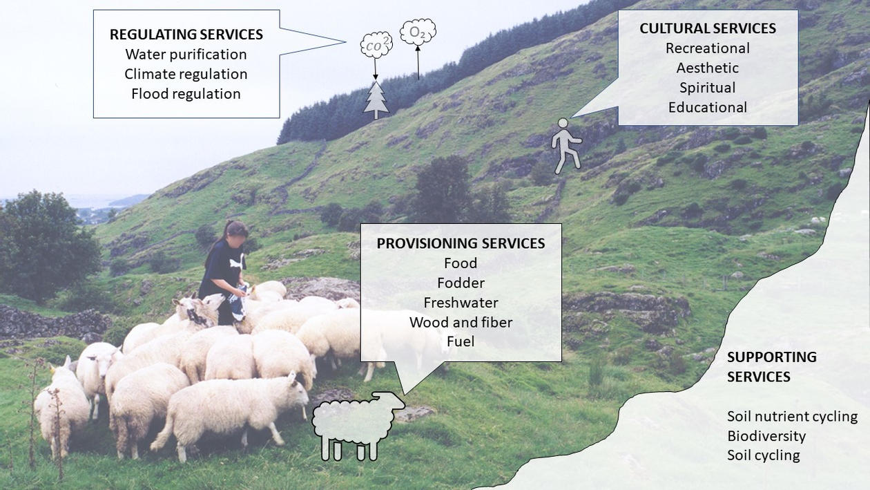 A person and a small flock of sheep on a hilly landscape annotated with lists of ecosystem services