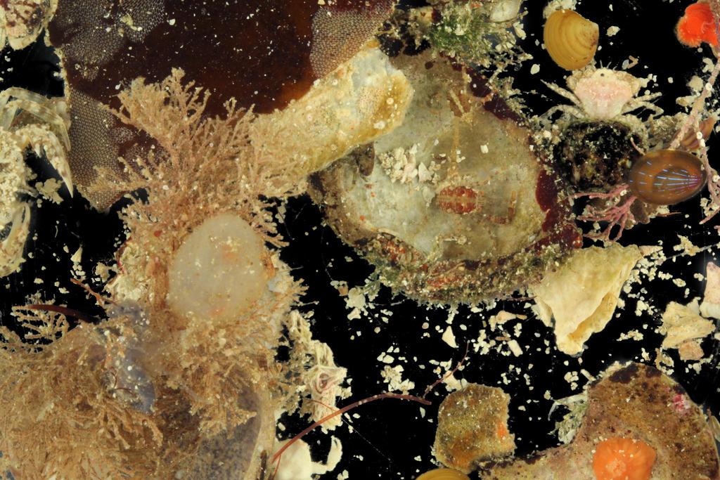 Evertebrater i et lite utvalg av en sedimentprøve