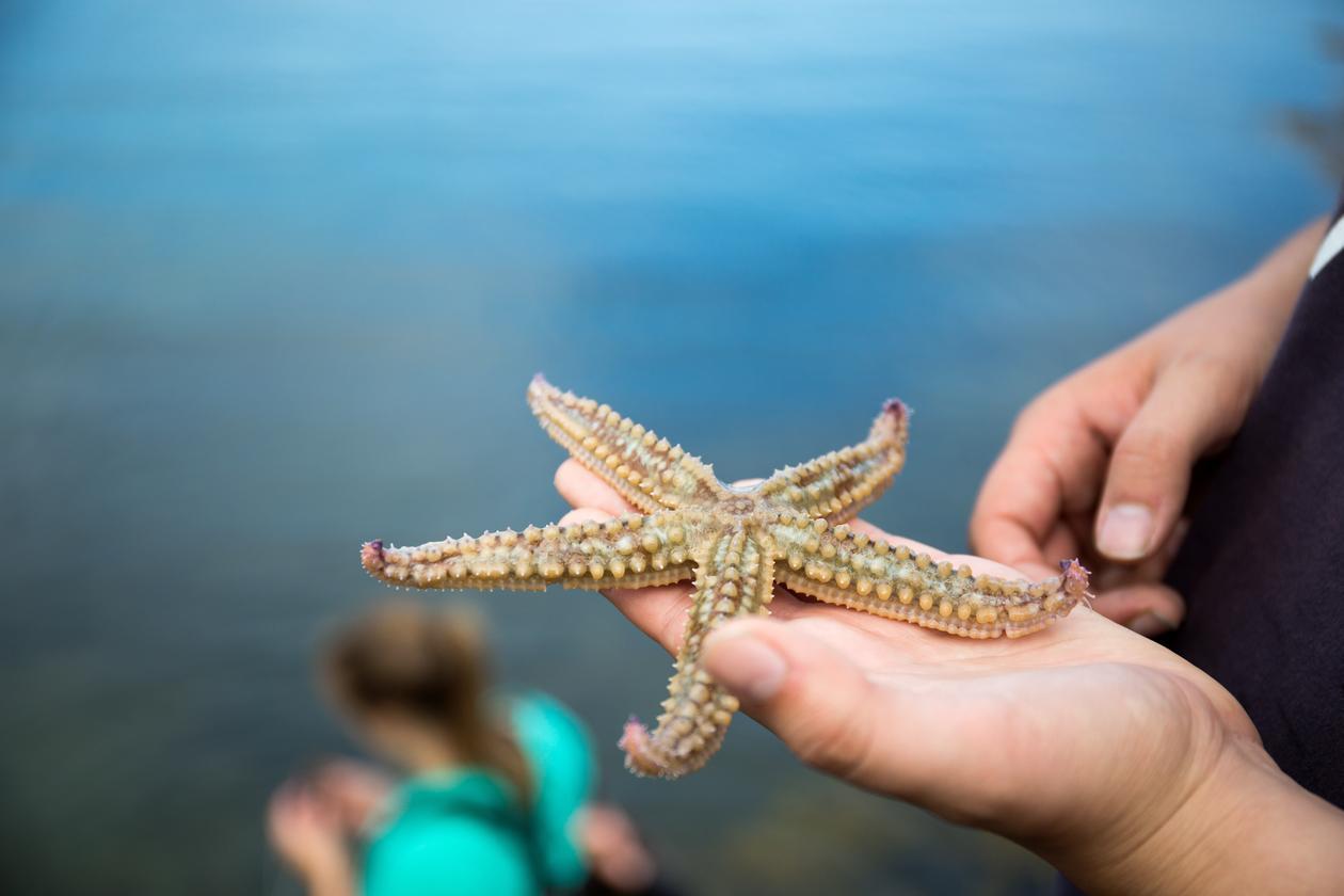 Starfish / Sjøstjerne