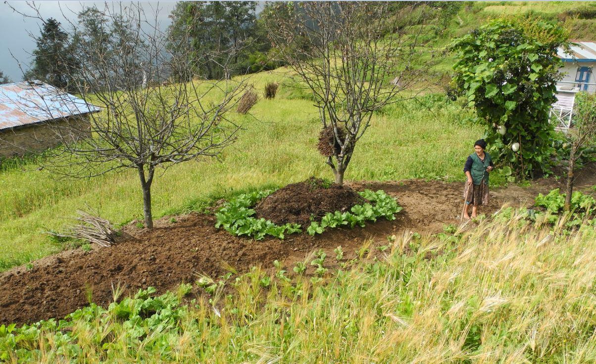 Organic farming in Himalaya.