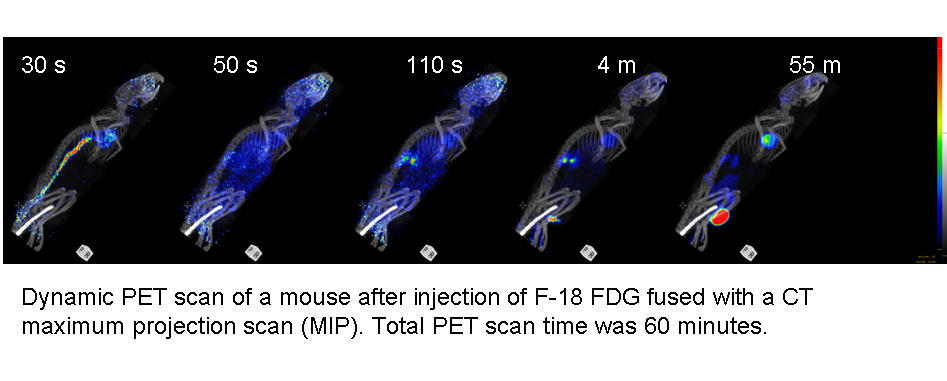 FDG in mouse