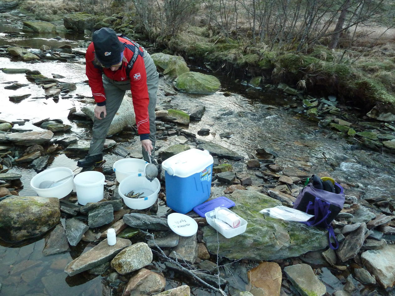 A researcher standing on the river bed with her equipment