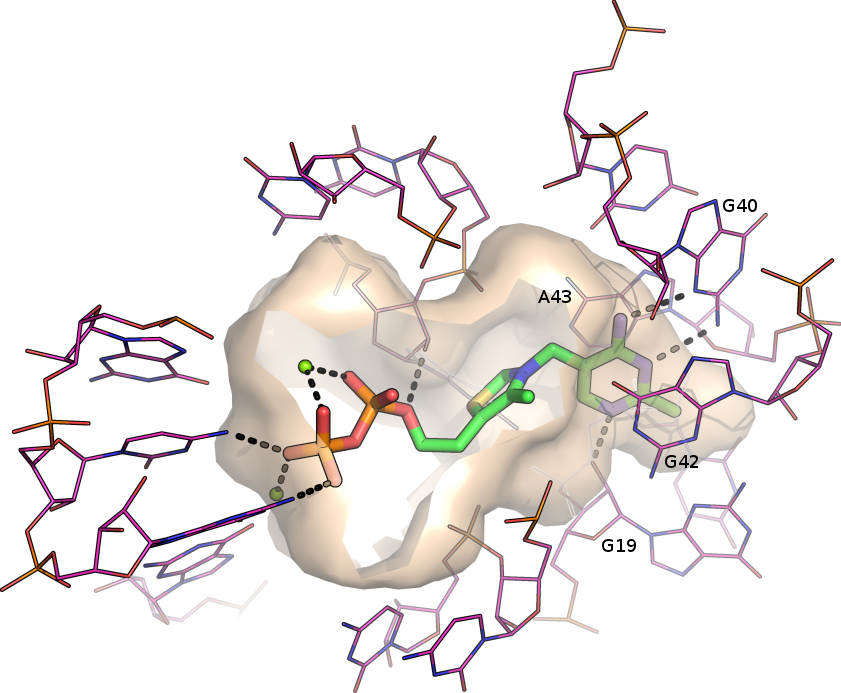 TPP riboswitch binding site