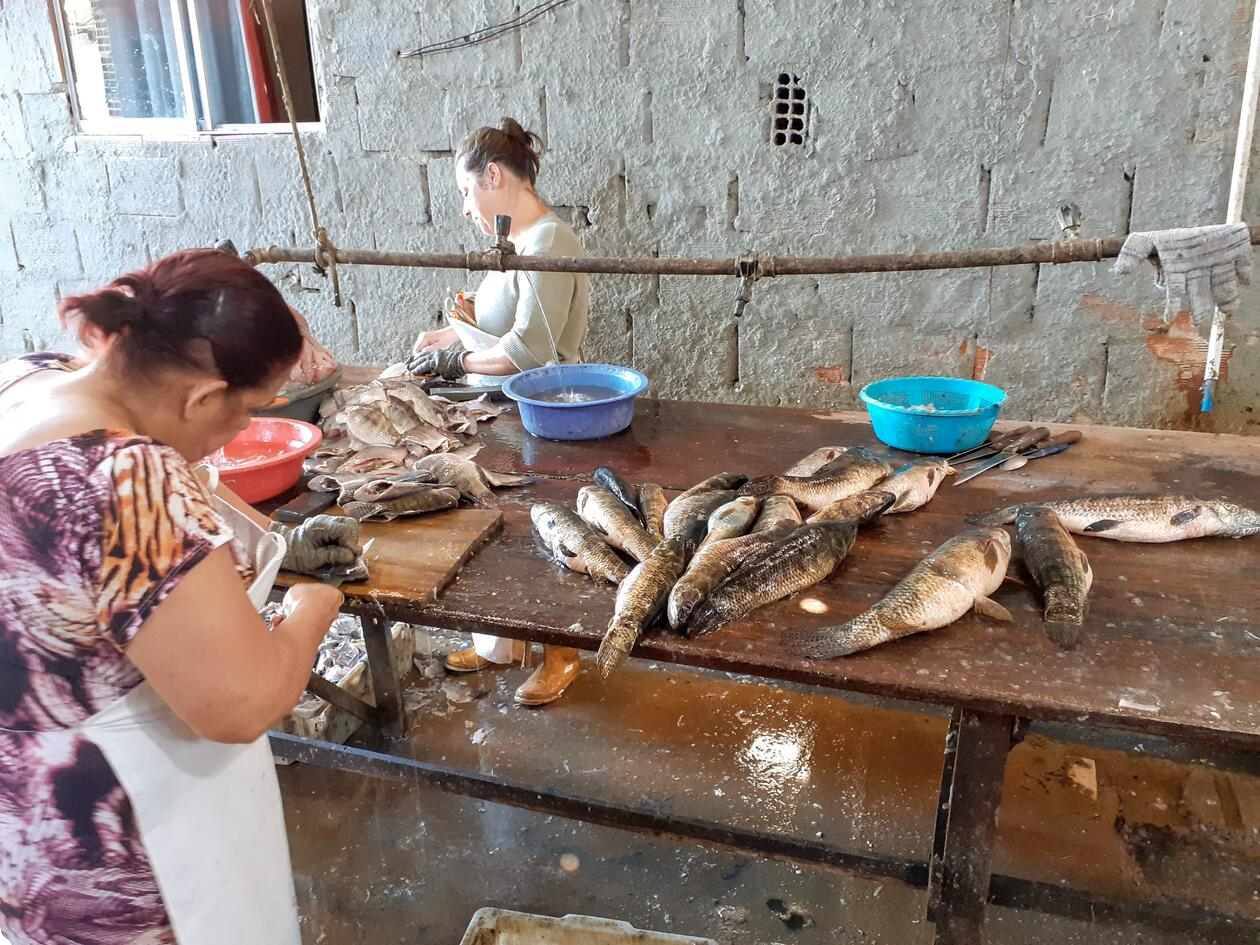 Picture of women filletting fish