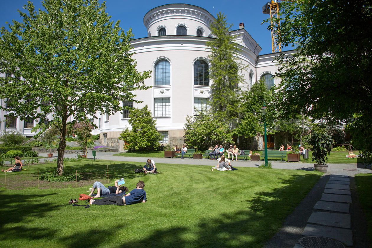 UiB museums gardens with people sunbathing and sitting on benches, relaxing