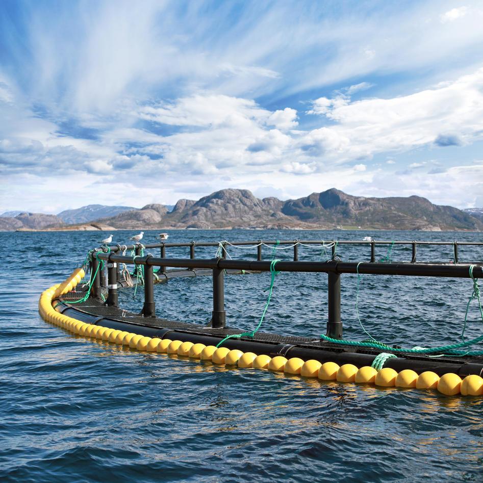 Aquafly university of bergen for Fish farm 3
